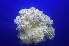 Jellyfish on blue background Royalty Free Stock Image