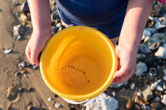 Jellyfish in a bucket Royalty Free Stock Photography