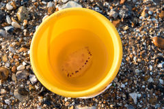 Jellyfish in a bucket Stock Image