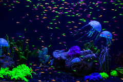 Jellyfish, corals and fish. Royalty Free Stock Photos