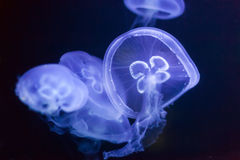 Jellyfish in deep dark water Stock Image