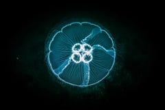 Jellyfish in deep sea. Stock Photo