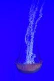 Jellyfish in deep water Stock Image