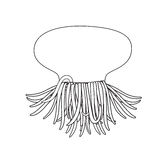 Jellyfish Drawing Stock Photography