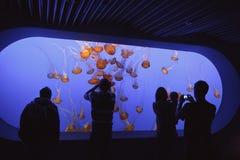 The Jellyfish Exhibit, Monterey Bay Aquarium. Spectators view the jellyfish exhibit, Monterey Bay Aquarium Stock Images