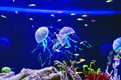 Jellyfish with the fishes Royalty Free Stock Images