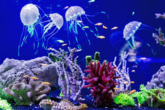 Jellyfish with the fishes Stock Photos