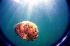 The jellyfish floats in the sea, the sun`s rays penetrate through the blue water, a look through the lens.  Royalty Free Stock Image