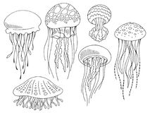 Free Jellyfish Graphic Set Black White Isolated Sketch Illustration Vector Royalty Free Stock Image - 121910616