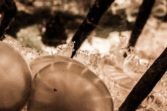 Jellyfish. Group of jellyfish in sepia color Royalty Free Stock Photography