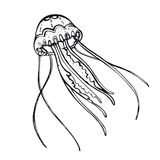 Jellyfish. Hand-drawn inhabitant of the underwater world. Simple linear picture jellyfish, element for design Royalty Free Stock Photography