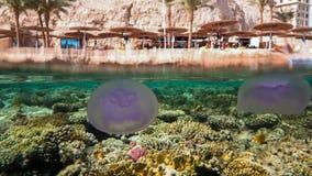 Jellyfish i plaża Zdjęcie Royalty Free