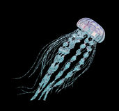 Jellyfish isolated on black background Royalty Free Stock Images