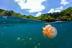 Jellyfish Lake Royalty Free Stock Images