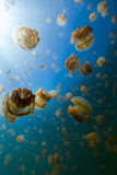 Jellyfish Lake Stock Photo