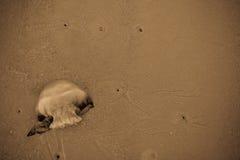 Jellyfish myjący up na plaży Fotografia Royalty Free