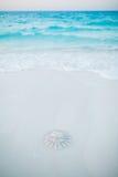 Jellyfish myjący brzeg Zdjęcie Royalty Free