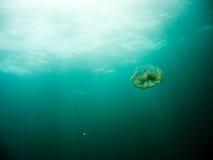 Jellyfish płynie nad oceanem Fotografia Royalty Free