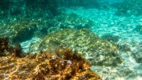 jellyfish przejrzyści Zdjęcie Royalty Free