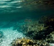 jellyfish przejrzyści obrazy stock