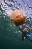 Jellyfish przy Lipe wyspą Obraz Stock