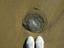 Jellyfish on the sand Royalty Free Stock Photos