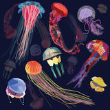 Jellyfish set Stock Photos