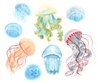 Jellyfish set. Hand-drawn with watercolor isolated on white vector illustration