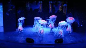 Jellyfish show stock video footage