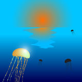 Jellyfish sunset Royalty Free Stock Images