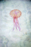 Jellyfish swimming in a sea Stock Photo
