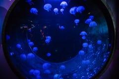 Jellyfish Tank Stock Images