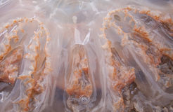 Jellyfish tentacles texture stock image