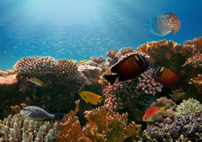 Jellyfish and Tropical fish in the Red Sea Royalty Free Stock Photo