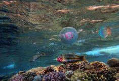Jellyfish and tropical Fish. Underwater world Stock Photography