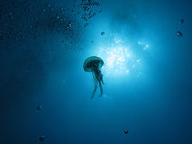 Jellyfish (U02) Royalty Free Stock Photo
