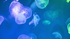 Jellyfish Underwater Footage, sea nature.  stock video footage