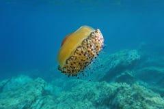 Jellyfish underwater sea Mediterranean jelly Stock Image