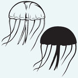 Jellyfish vector Stock Photos