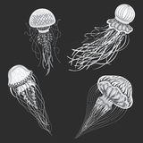 Jellyfish vector isolated cartoon set of icons Stock Image