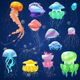 Jellyfish vector ocean jelly-fish and underwater nettle-fish illustration set of jellylike glowing medusa or fish in sea royalty free illustration