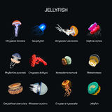 Jellyfish vector set in flat style design. Different kind of underwater life species icons collection. Stock Image