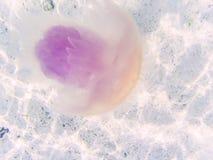 jellyfish w Andaman morzu fotografia royalty free