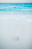 Jellyfish washed to shore Royalty Free Stock Photo