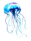 Jellyfish watercolor illustration. Medusa painting isolated on white background, colorful tattoo design. Stock Image