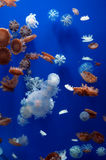 Jellyfish in wuhan polar region ocean world Stock Photo