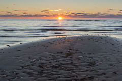 Jellyfishe στο φως ηλιοβασιλέματος Στοκ εικόνες με δικαίωμα ελεύθερης χρήσης
