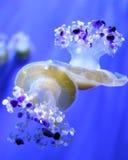 jellyfishes δύο στοκ εικόνες με δικαίωμα ελεύθερης χρήσης