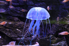 jellyfishes obraz royalty free