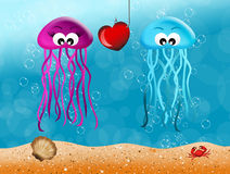 Jellyfishes in love Royalty Free Stock Photos